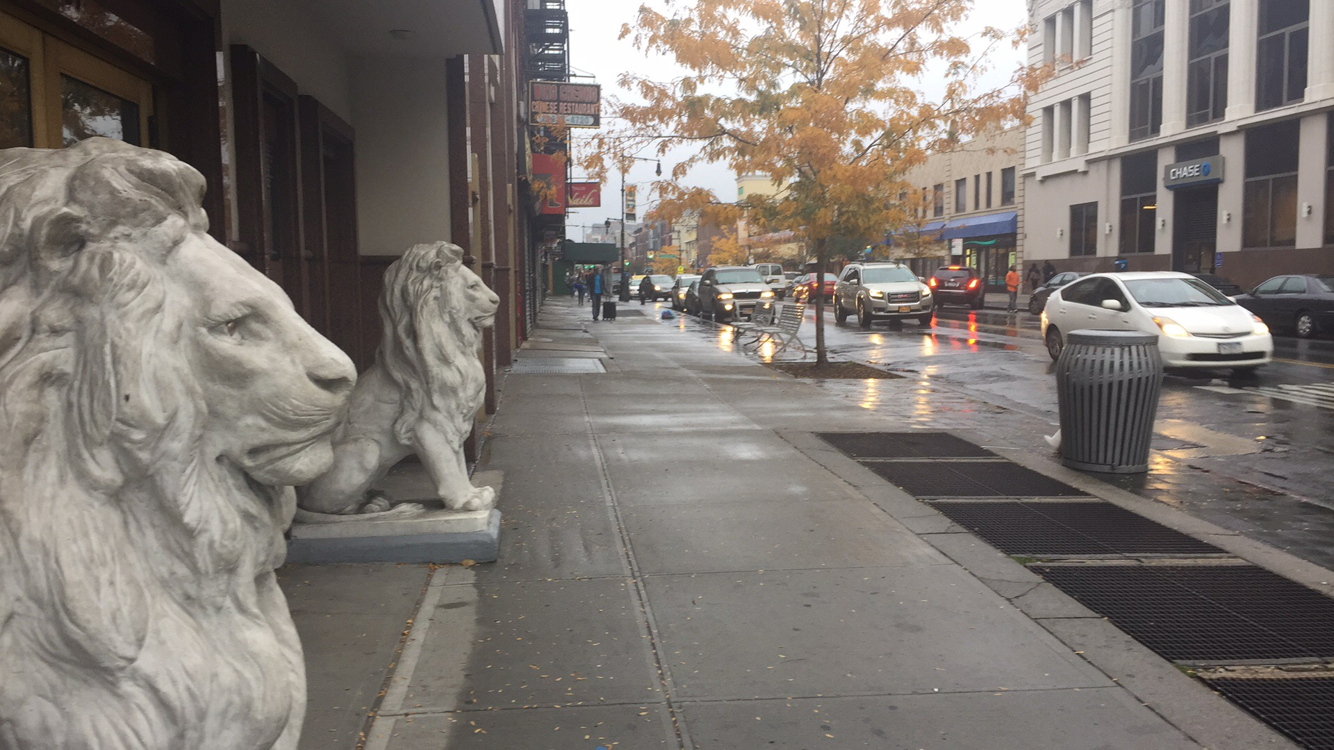 Brooklyn lions in the rain