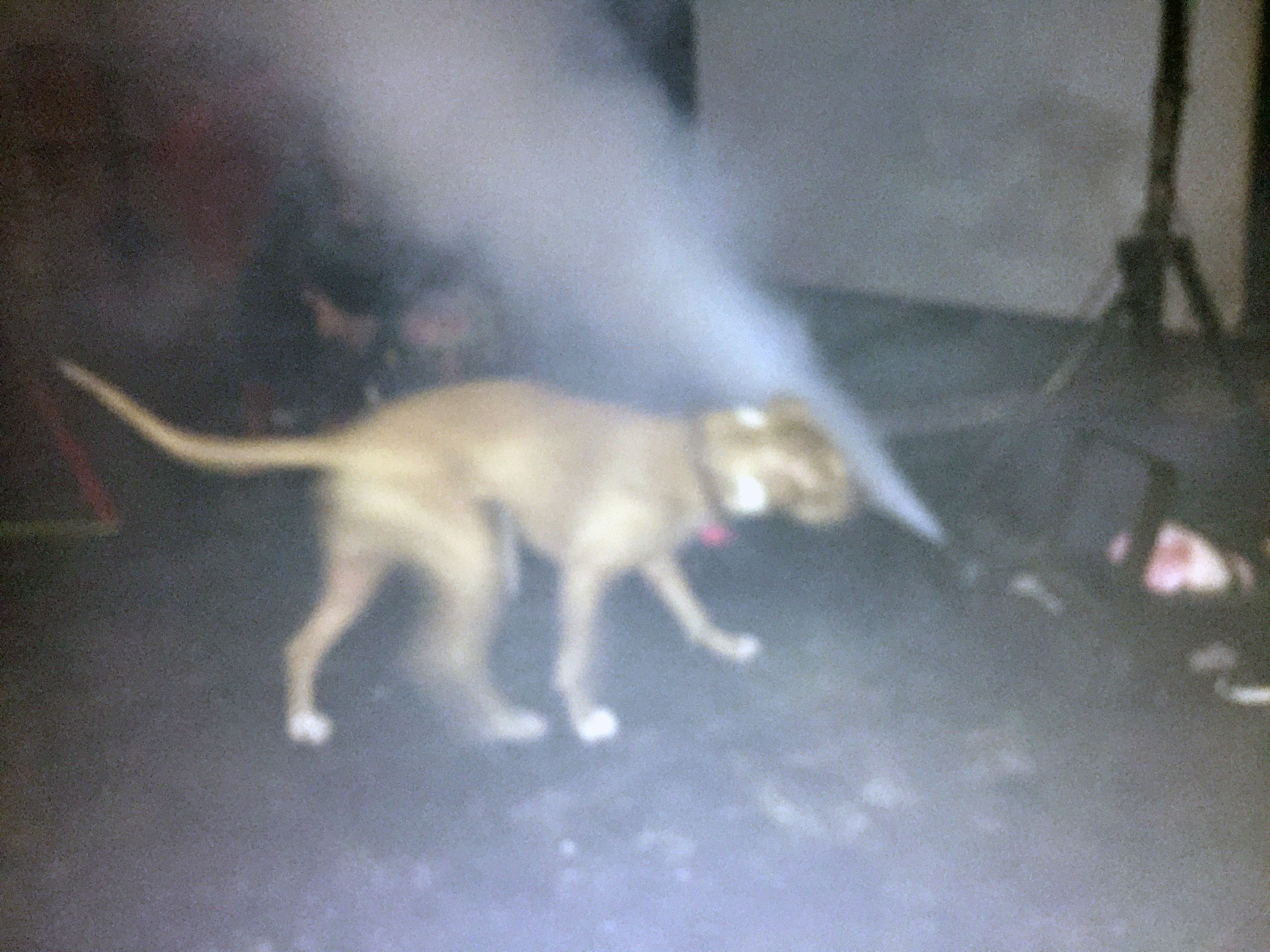 Dog fighting smoke machine